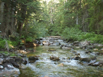 Bull and Westslope Cutthroat Trout Habitat South Salmo River