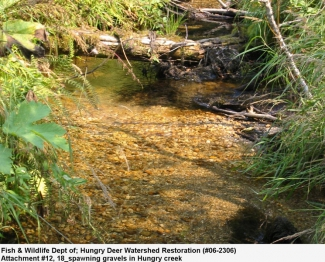 Fish Spawning Gravels Hungry Deer Watershed